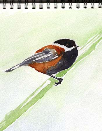 Chestnut-backed_chickadee