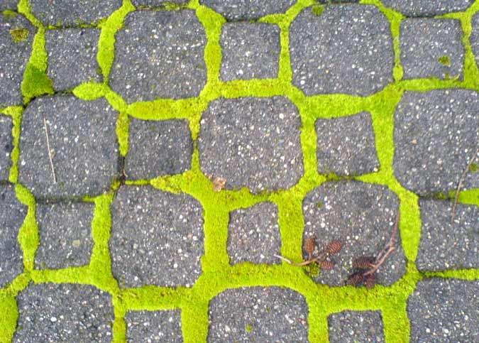 Mosspatterns