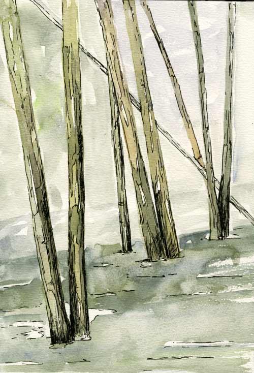 Aldertrees