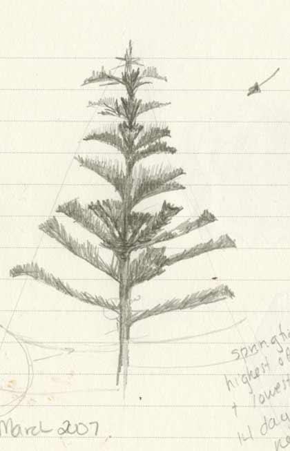 Mysterytree