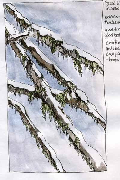 Snowlichen copy