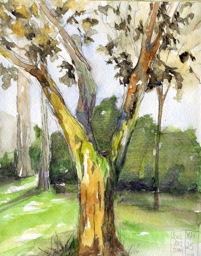 Boulevard_tree