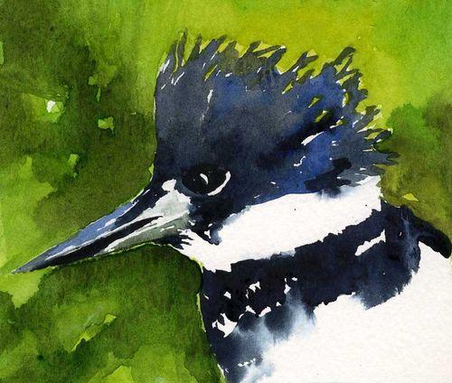 Beltedkingfisher1