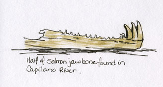 Salmonjawbone